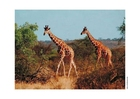 Photos Girafe