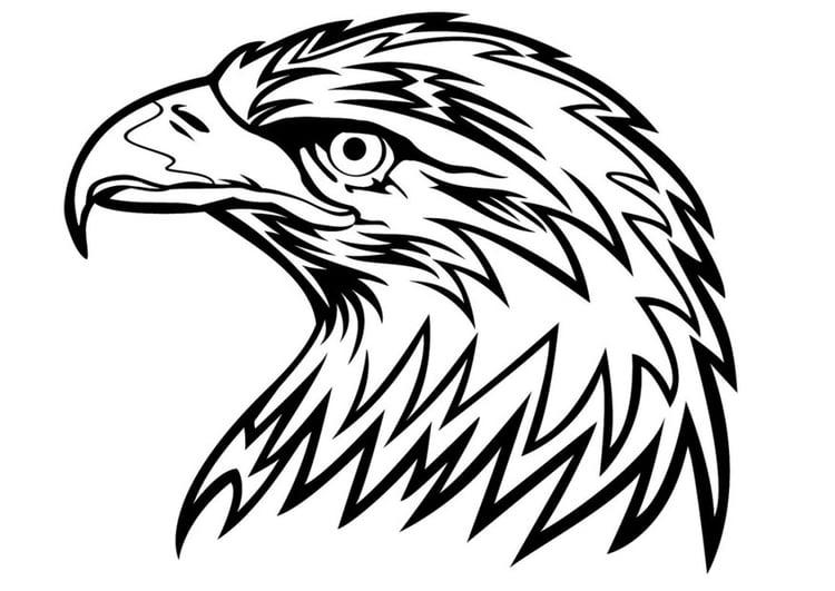 Coloriage aigle img 24672 - Dessin de aigle ...