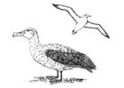 Coloriage albatros