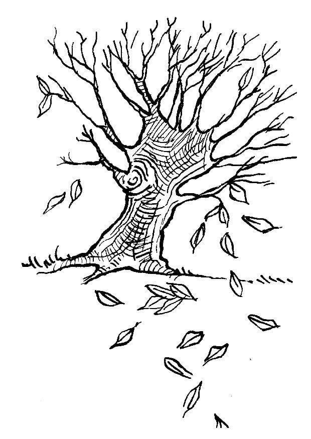 Coloriage arbre en automne img 7581 - Arbre automne dessin ...