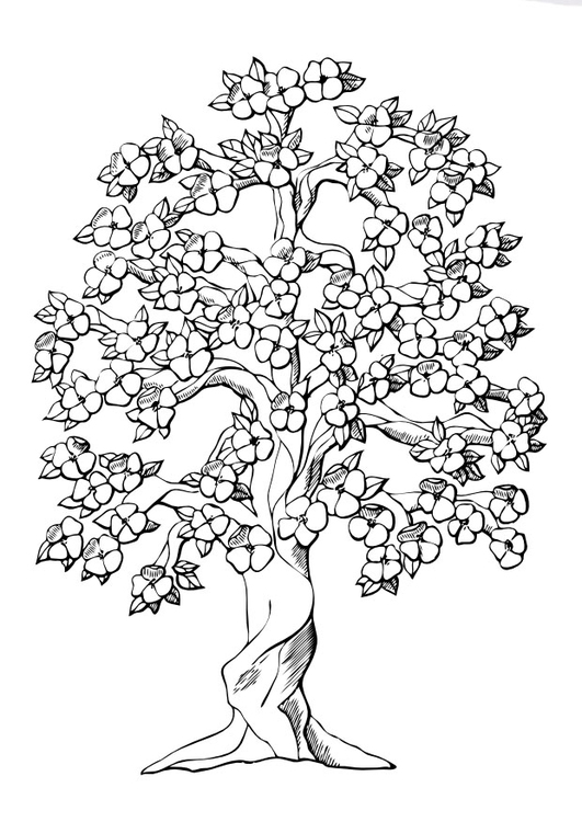 Photo Coloriage Arbre.Coloriage Arbre Et La Floraison Img 9980