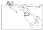 Coloriage attaque de requin