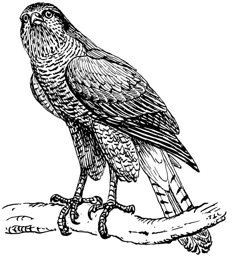 Volwassen Kleurplaten Dieren Konijn Coloriage Autour Des Palombes Img 15760