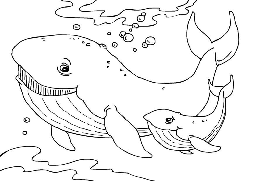 Coloriage baleines - img 27231