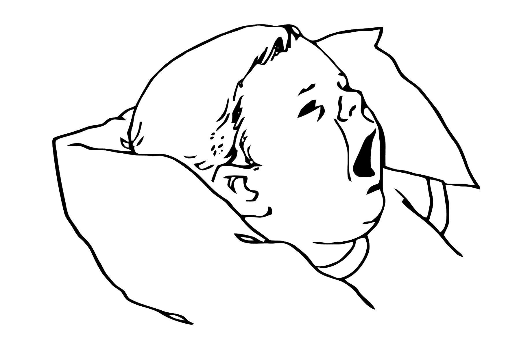 Baby Boy Face Coloring Pages