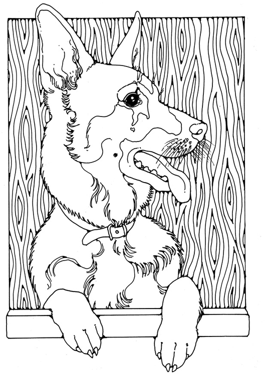 Coloriage Berger Allemand Img 28208 Images