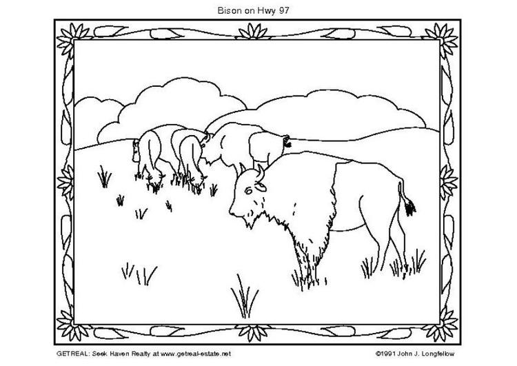 Coloriage bison img 5751 - Bison coloriage ...