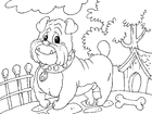 Coloriages bouledogue