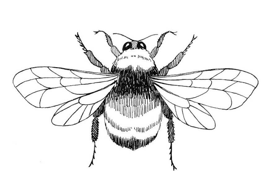 Anatomy of a bumble bee 2511854 - togelmaya.info