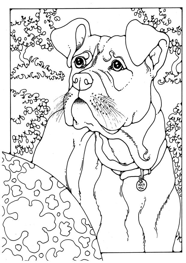 baby boxers coloring pages - photo #32