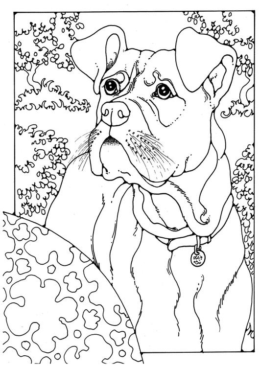 Coloriage Boxer Chien Imprimer.Coloriage Boxer Img 28204