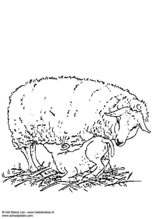 Coloriage brebis et agneau img 3737 - Brebis dessin ...