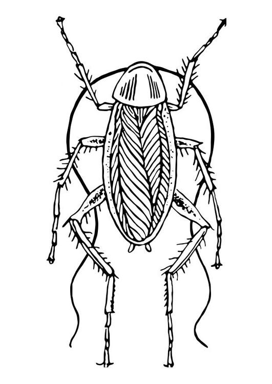 Coloriage cafard img 18569 - Dessin de cafard ...