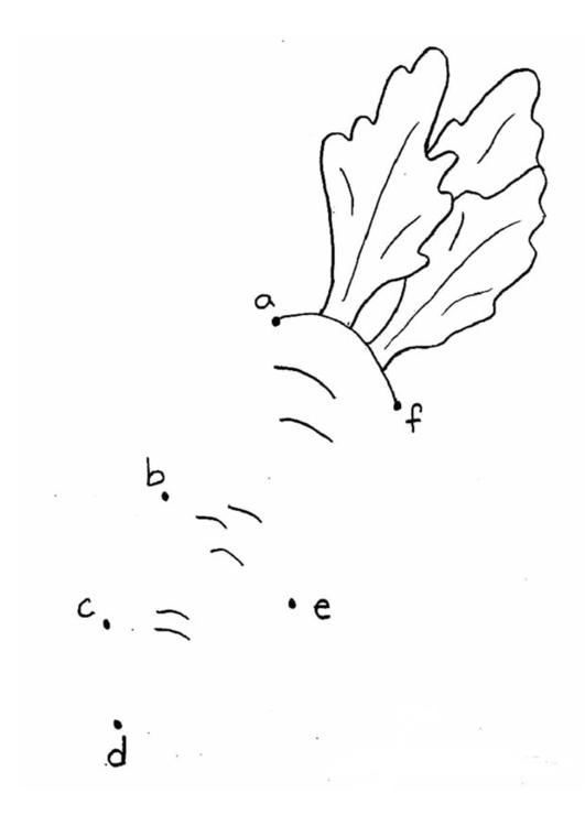 Coloriage carotte lettres img 21865 - Carotte coloriage ...