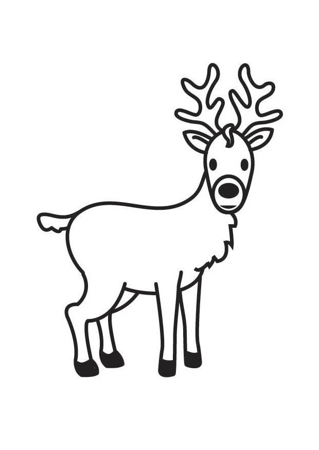 Coloriage Cerf Img 17597