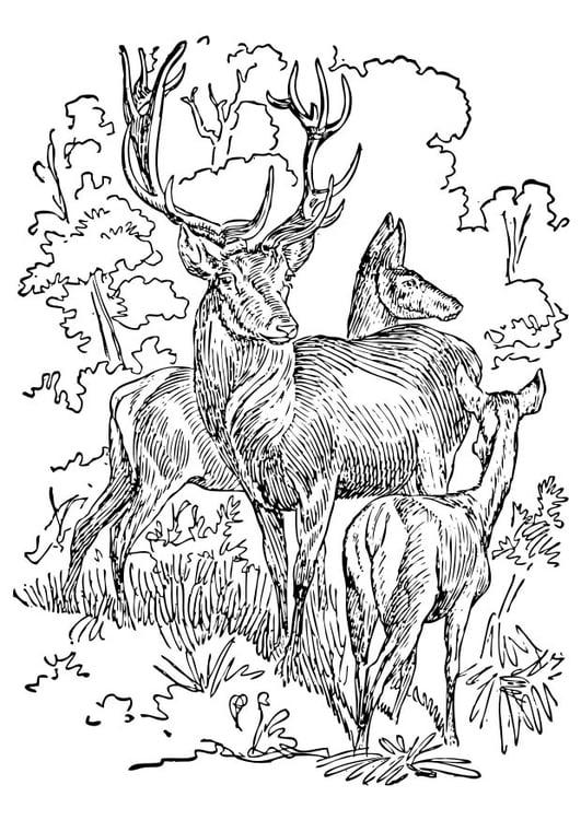 Coloriage cerf et biche img 17395 - Dessin bois de cerf ...