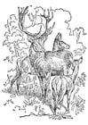 Coloriage cerf et biche