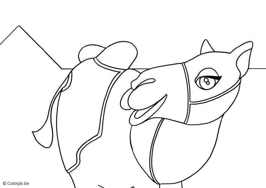 Coloriage chameau img 5664 - Dessin de chameau ...