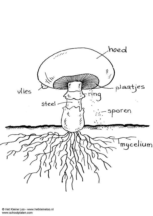 Coloriage champignon img 3726 - Dessin de champignons a imprimer ...