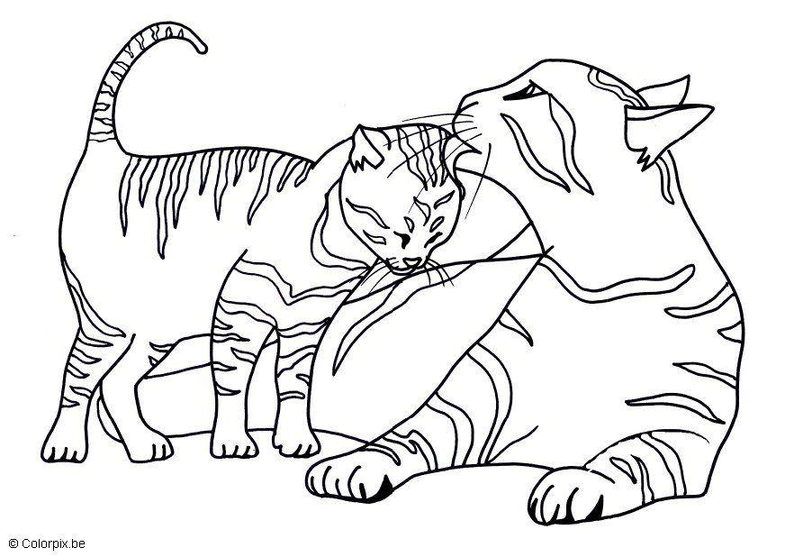 Coloriage chats img 17439 - Coloriage des chats ...