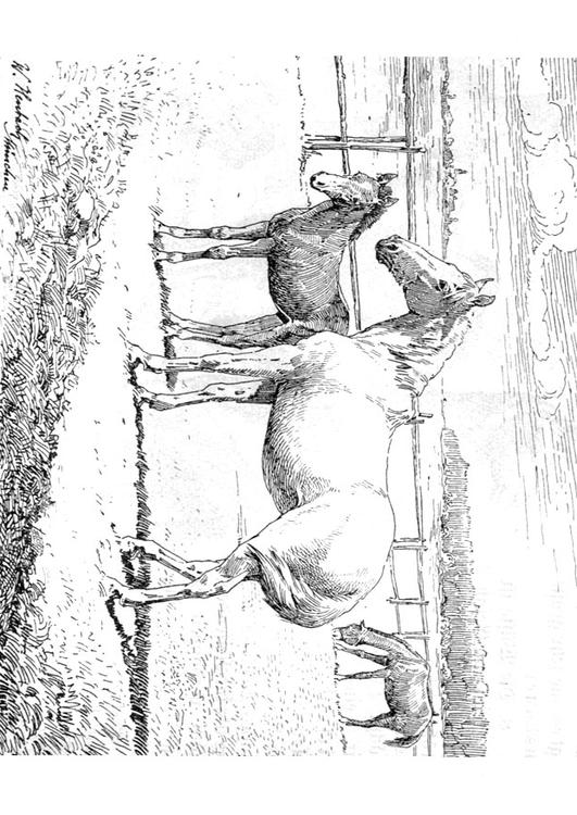 Coloriage Cheval Avec Poulain Img 9772