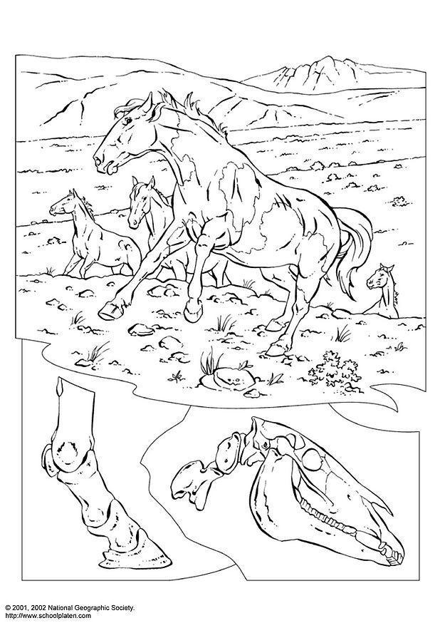Coloriage de chevaux difficile - Dessin de chevaux sauvage ...