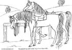 Coloriage chevaux sellés
