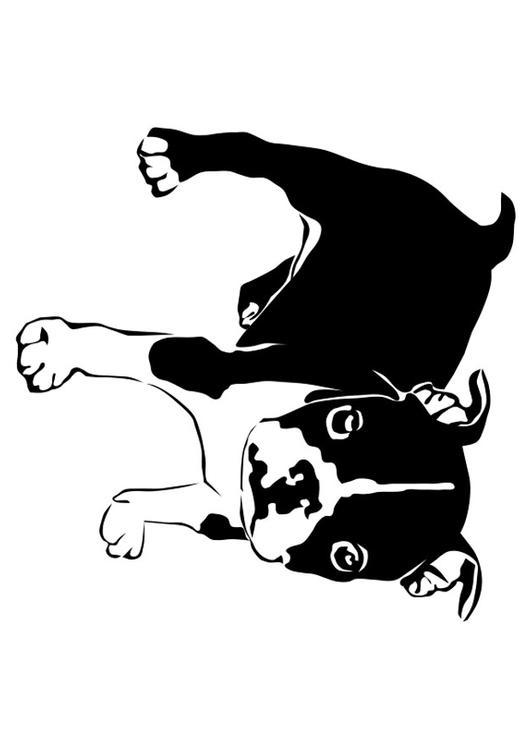 coloriage chien bouledogue français img 27821