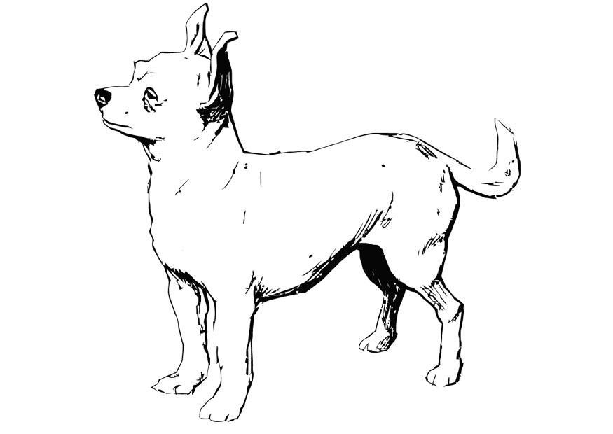 Dibujo De Chihuahua: Coloriage Chien