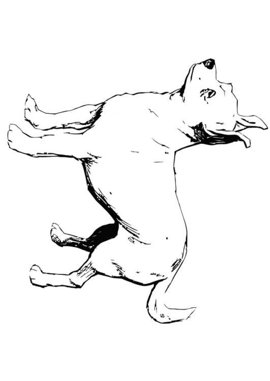 Coloriage chien chihuahua img 13704 - Dessin de chi ...
