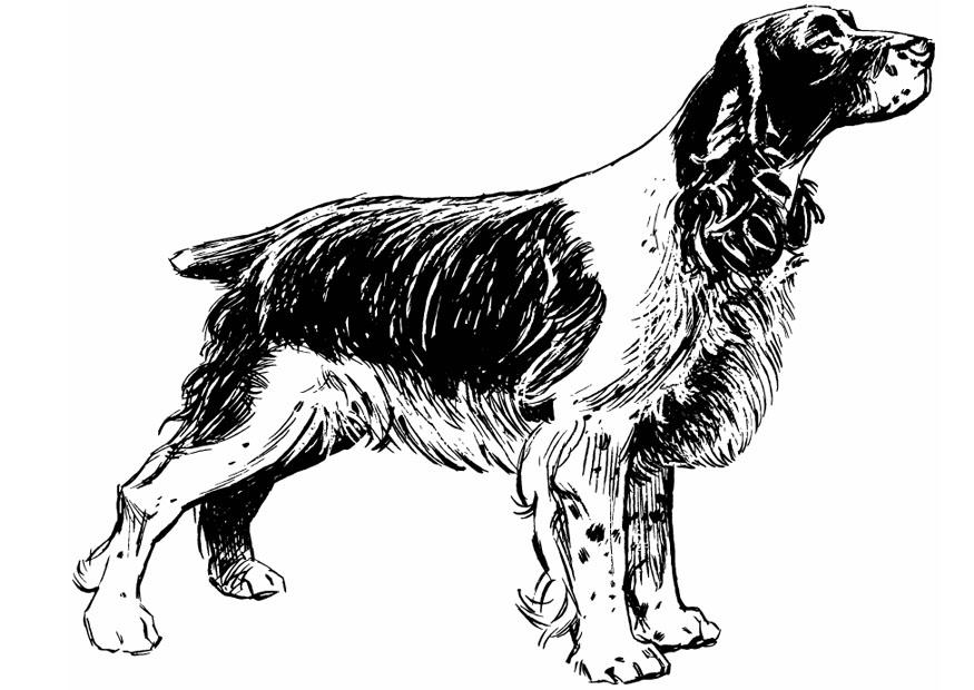 Coloriage Chien Cocker.Coloriage Chien Cocker Spaniel Img 13708 Images