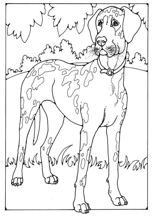 coloriage chien danois img 28209