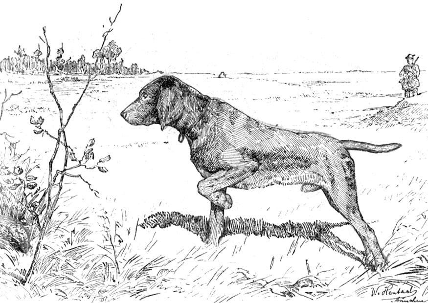 Coloriage chien de chasse img 9762 - Dessin de chasse ...