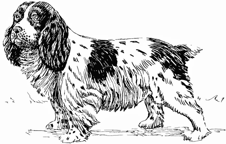 Coloriage Chien Cocker.Coloriage Chien Epagneul Img 15752