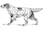 Coloriage chien - setter