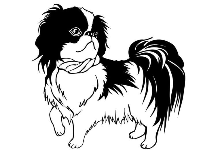coloriage chien shih tzu - Coloriage Chien