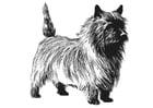 Coloriage chien - terrier