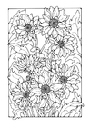 Coloriages chrysanthemum
