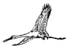 Coloriage cigogne
