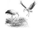 Coloriage cigogne sur nid