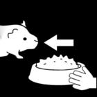 Coloriage cobaye - nourrir