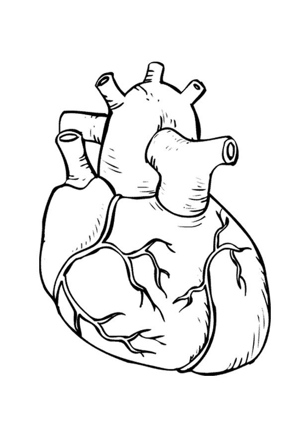 Coloriage coeur img 9486 - Dessin coeur humain ...