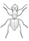 Coloriage coléoptère