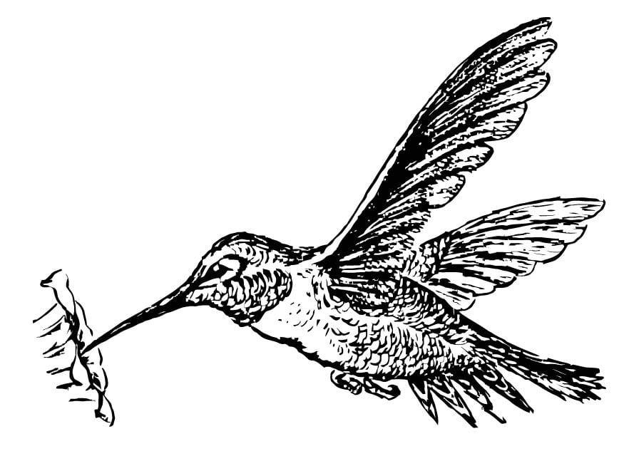 Vogel Kleurplaat Voor Volwassenen Coloriage Colibri Img 15722