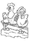 Coloriage coq et poules