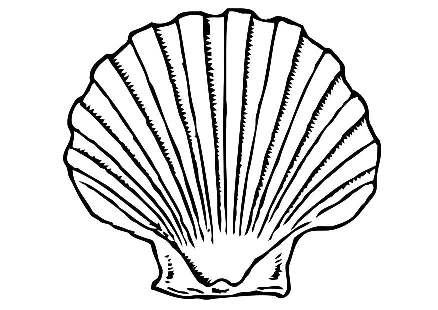 Coloriage coquille img 19619 - Coquille saint jacques dessin ...