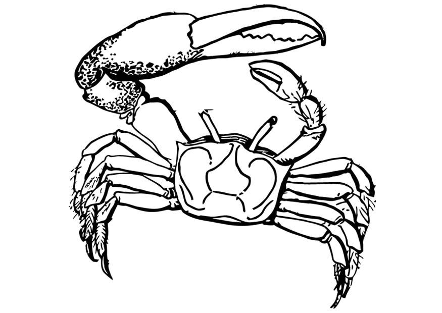 Coloriage crabe - img 16584