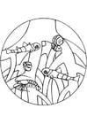 Coloriage crevettes de mangrove