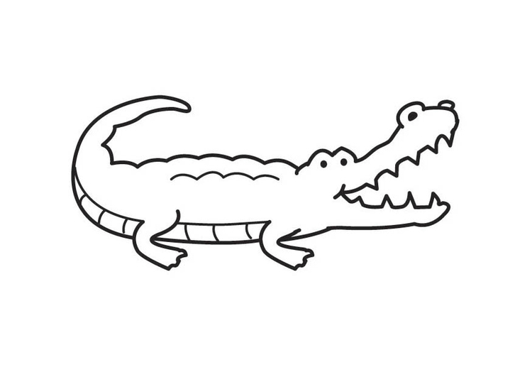 Coloriage crocodile img 17575 - Image crocodile dessin ...