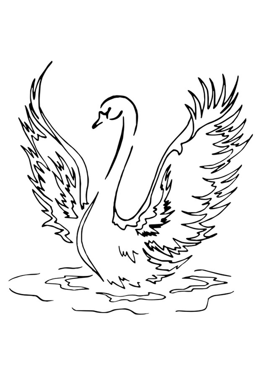 Coloriage cygne img 30147 - Coloriage cygne ...